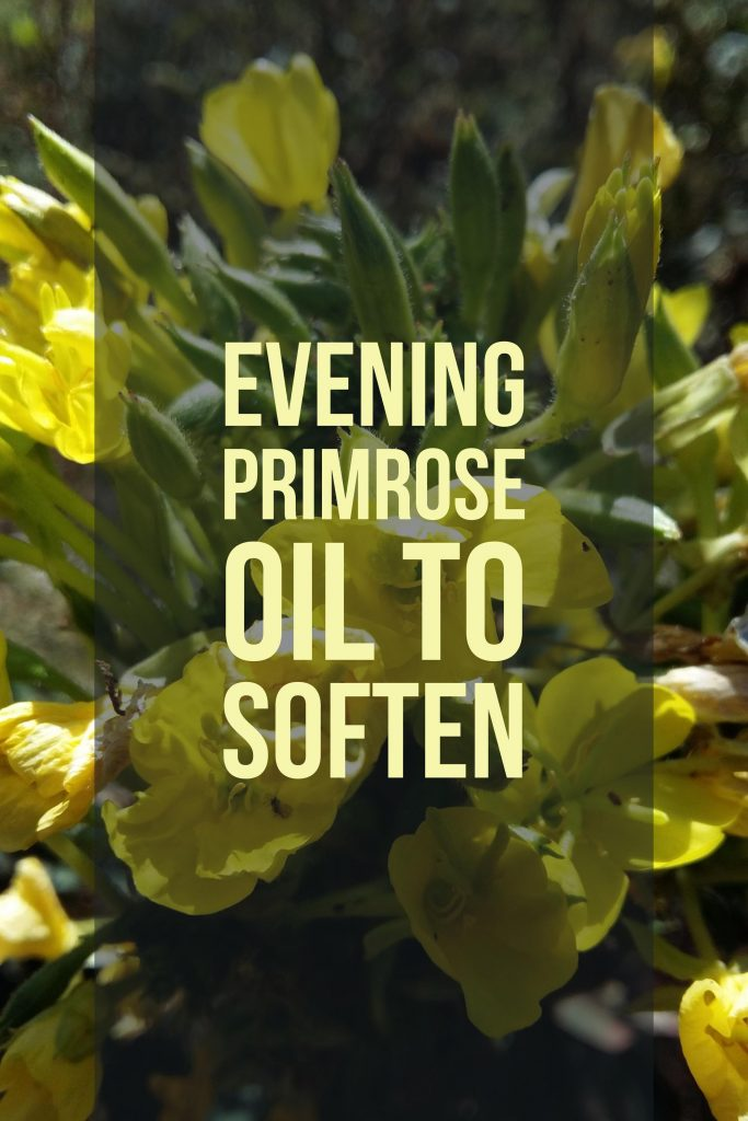 Evening primrose oil can help soften the cervix