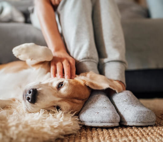Pet Owners 5 Simple Ways to Keep Your Home Clean